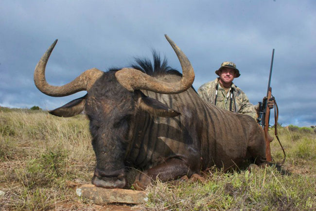 Matt's blue wildebeest
