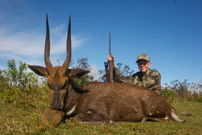 Joey's bushbuck