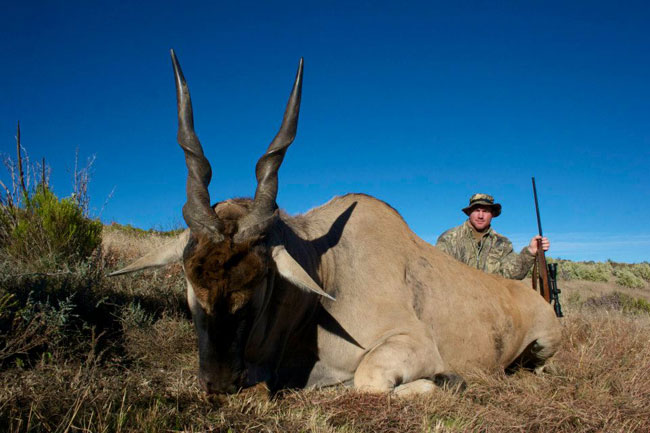 Matt's eland