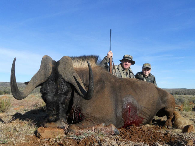 Matt's black wildebeest